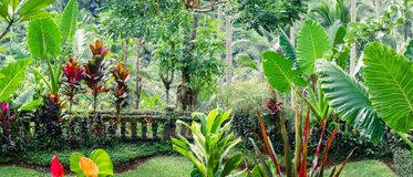 Fantasy tropical plants  in mossy garden Stock Photos