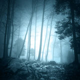 Fantasy turquoise color foggy forest landscape Royalty Free Stock Photo