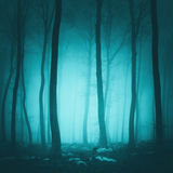 Fantasy Turquoise Color Forest Royalty Free Stock Images