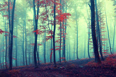 Fantasy vintage autumn forest Royalty Free Stock Images