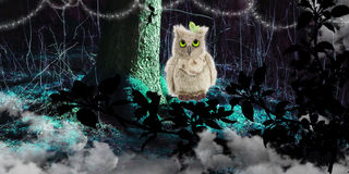 Fantasy wallpaper with lost plush owl in magical forest Royalty Free Stock Photo