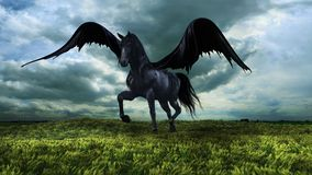 Fantasy winged horse Royalty Free Stock Photo