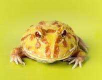 Fantazi żaba Obraz Stock