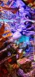 Fantazi ośmiornica fotografia royalty free