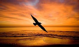Fantazia-vlucht aan een vogel. stock foto's