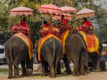 Fantazja elephent w Thailand Fotografia Royalty Free