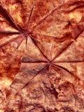 Fantazja folwarczka tło od liścia klonowego zdjęcie royalty free
