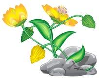 fantazja kwiat Zdjęcia Stock