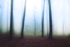 Fantazy fogy forest Royalty Free Stock Photography