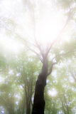 Fantazy fogy forest. Autumn mist in a romantic forest fogy Royalty Free Stock Photography