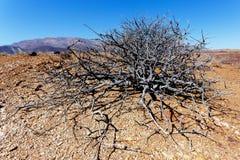 Fantrastic Namibia desert landscape Royalty Free Stock Photo