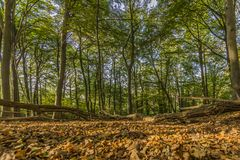 Fantstic day of autumn in the forest with branches of trees and dry leaves on the ground stock photos