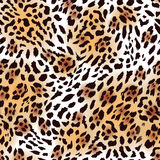 Far Eastern leopard fur seamless vector print Royalty Free Stock Images