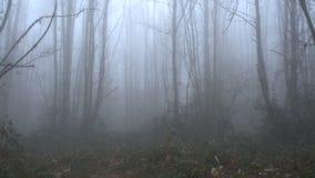 A far men walking through fog in a lonely forest SF