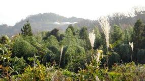 Faraway view of nature and Teshima art museum Royalty Free Stock Image