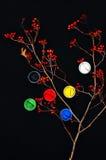 Farb wiadra Farba w bankach, na czarnym tle Przygotowanie dla malować jesień liście na czarnym tle Viburnum gałąź Fotografia Stock