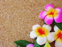 Farba plumeria kwiat rzeźbił na ceglanym tle z astronautycznym tłem fotografia royalty free