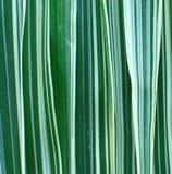 Farbband-Gras-Hintergrund Lizenzfreie Stockbilder