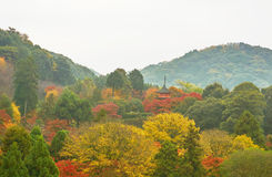 Farbe der Herbstsaison am düsteren Tagesmorgen Lizenzfreies Stockbild