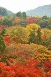 Farbe der Herbstsaison am düsteren Tagesmorgen Lizenzfreie Stockfotos