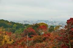Farbe der Herbstsaison am düsteren Tagesmorgen Stockfotos