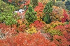 Farbe der Herbstsaison am düsteren Tagesmorgen Stockfoto