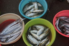 Farbe des Beckens und der Fische Lizenzfreies Stockbild