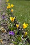 Farbe des Frühlinges. Stockbild