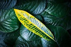 Farbe des Gelbs lässt Reste auf grünem Blatthintergrund Stockfotos