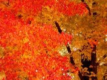 Farbe des Herbstes Stockfoto