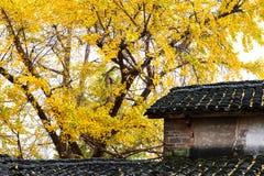 Farbe des Herbstes Stockfotografie
