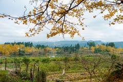 Farbe des Herbstes Lizenzfreie Stockfotografie