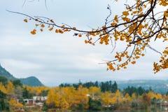 Farbe des Herbstes Stockbild