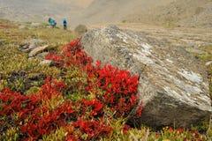 Farbe des Herbstes in den Bergen Stockfotografie