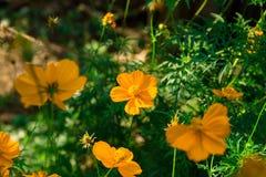 Farbe des natürlichen Lichtes des Morgens Lizenzfreie Stockfotos