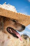 Farbe des vertikalen Formats schoss vom Schoßhund, der einen Strohsonnenhut auf den Strand trägt Stockfotos