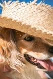 Farbe des vertikalen Formats schoss vom Schoßhund, der einen Strohsonnenhut auf den Strand trägt Stockfoto
