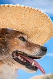 Farbe des vertikalen Formats schoss vom Schoßhund, der einen Strohsonnenhut auf den Strand trägt Lizenzfreies Stockbild