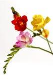 Farbe-flawers Stockbild