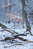 Farbe im Winter Lizenzfreie Stockfotos