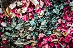 Farbe verlässt voll getrocknet Stockbild