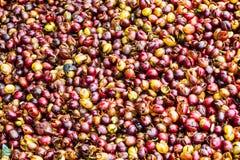 Farbe von Kaffeebohnen Stockbild