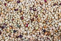 Farbe von Kaffeebohnen Stockfotos