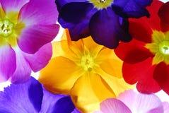Farben Stockfotos