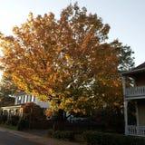 Farben auf dem Baumändern Stockbilder