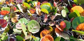 Farben auf der Küste lizenzfreie stockfotografie