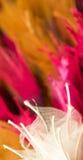 Farben-Auszug Stockfotografie