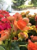 Farben der Blume lizenzfreie stockfotografie