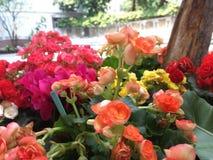 Farben der Blume lizenzfreies stockfoto