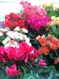 Farben der Blume lizenzfreies stockbild